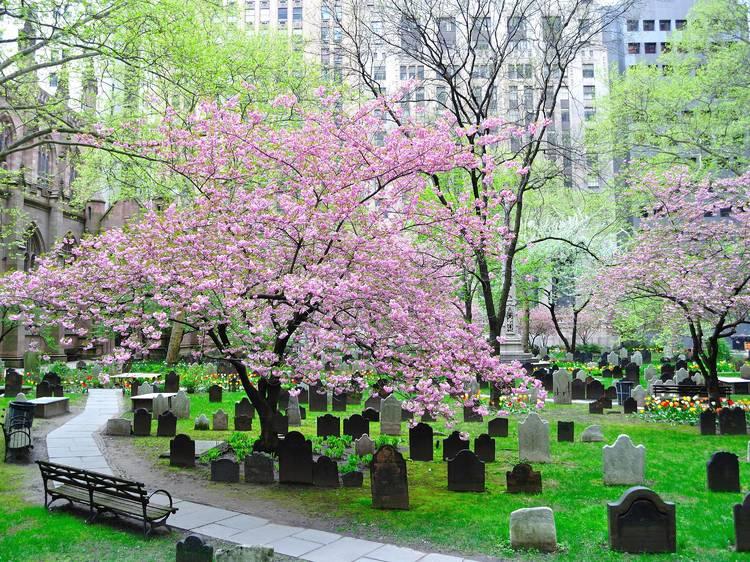 New York City, NY: Trinity Church Cemeteries