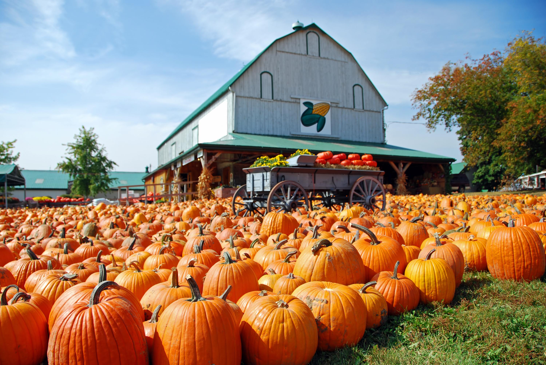 The best farms near NYC