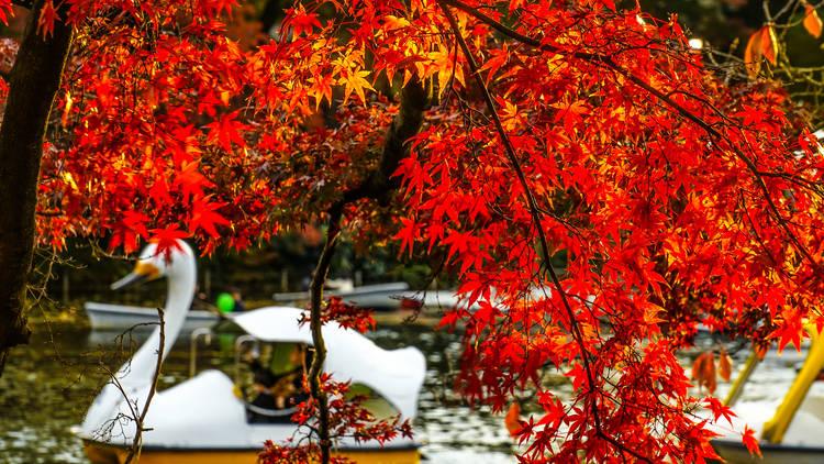 nokashira Park in Kichijoji Photo: Makoto Honda/Dreamstime