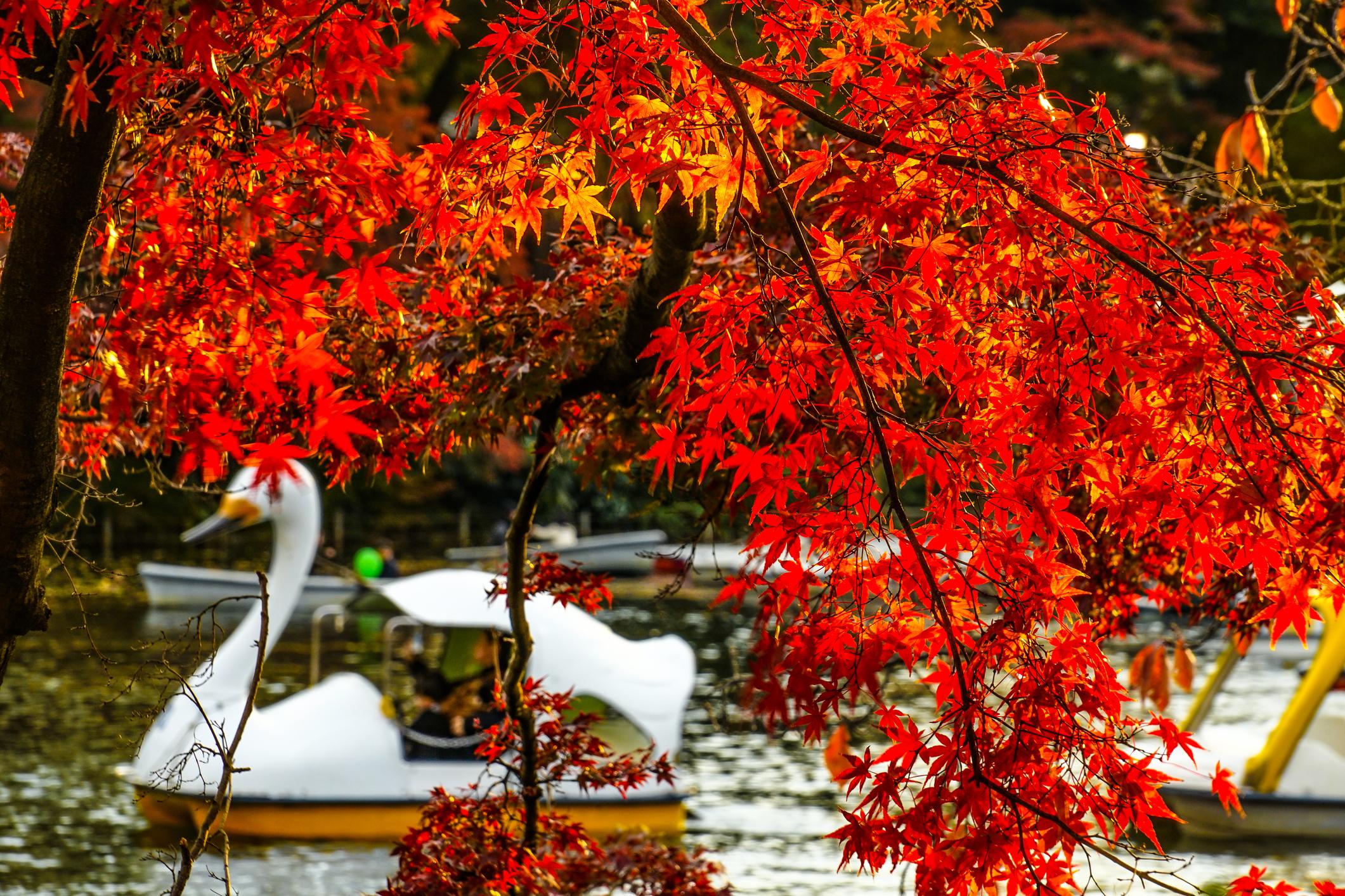 Inokashira Park in Kichijoji Photo: Makoto Honda/Dreamstime