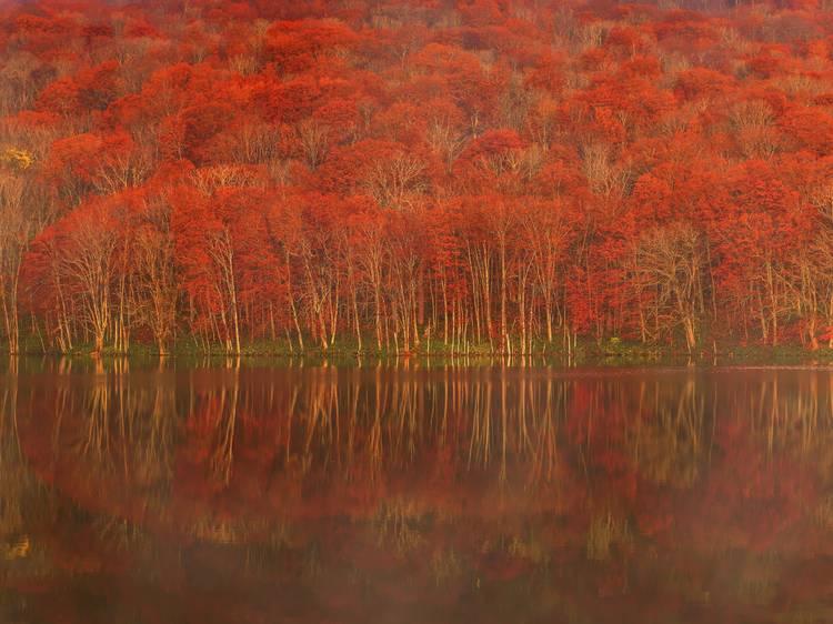 秋に旅すべき美しい紅葉スポット8選