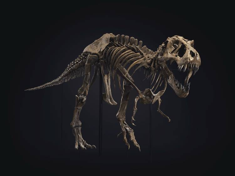 See one of the largest T. rex skeletons in the world at Christie's