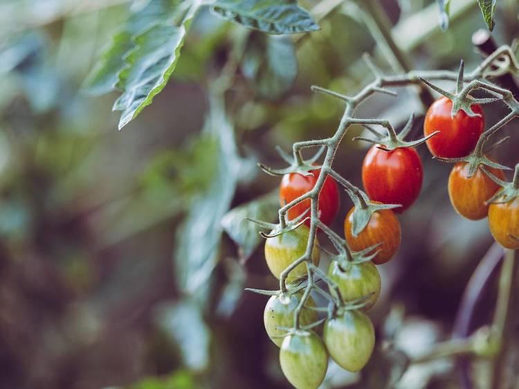 食品待機物を堆肥に変える