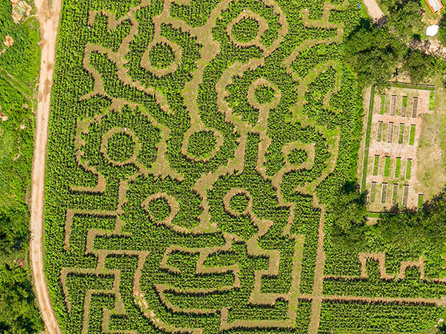 Queens Farm Corn Maze
