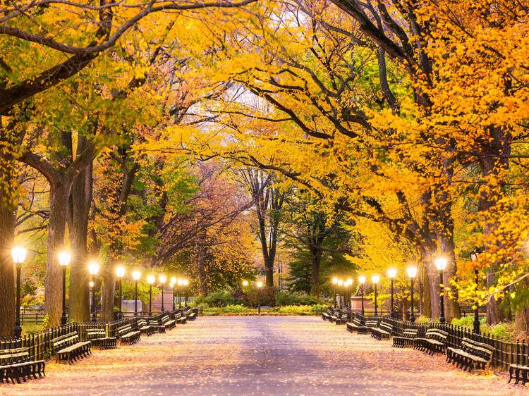 NYC events in October 2020