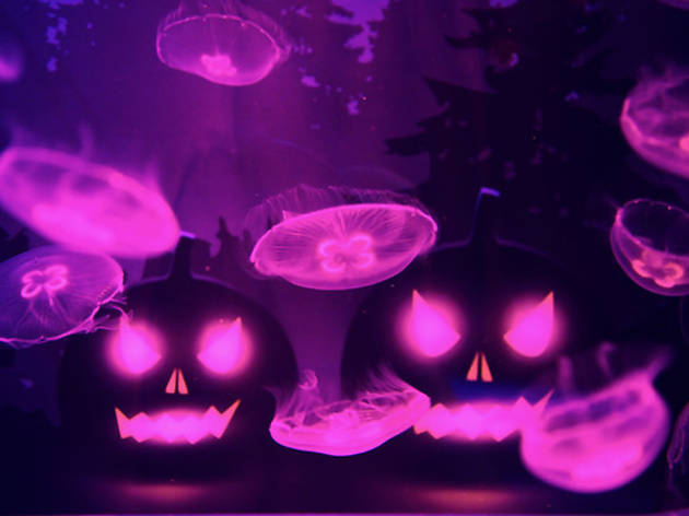 ハロウィン in すみだ水族館