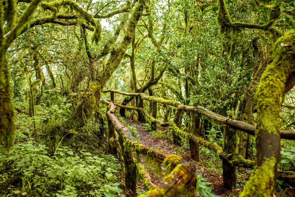 Parque Nacional de Garajonay. La Gomera