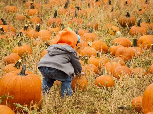 Find a fall festival