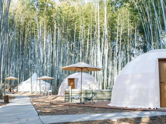Bamboo Forest, glamping