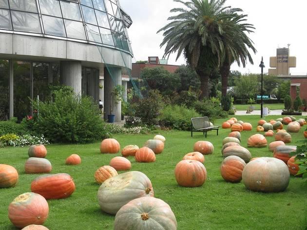 Yumenoshima Halloween Party