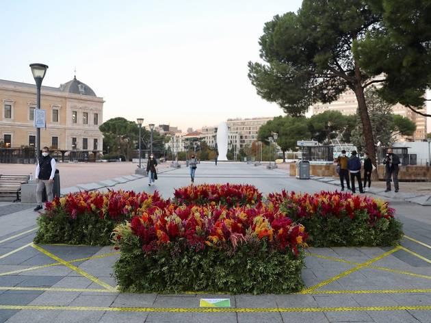 Flor Motion. Plaza de Colón