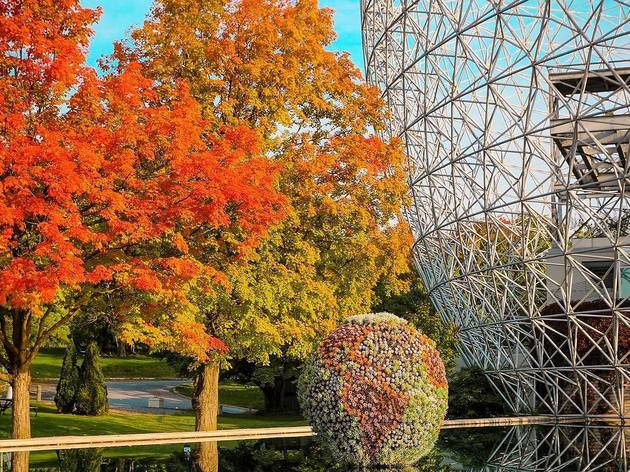Montreal, Fall / Automne