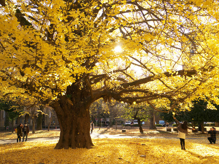 13 best things to do in Tokyo this autumn