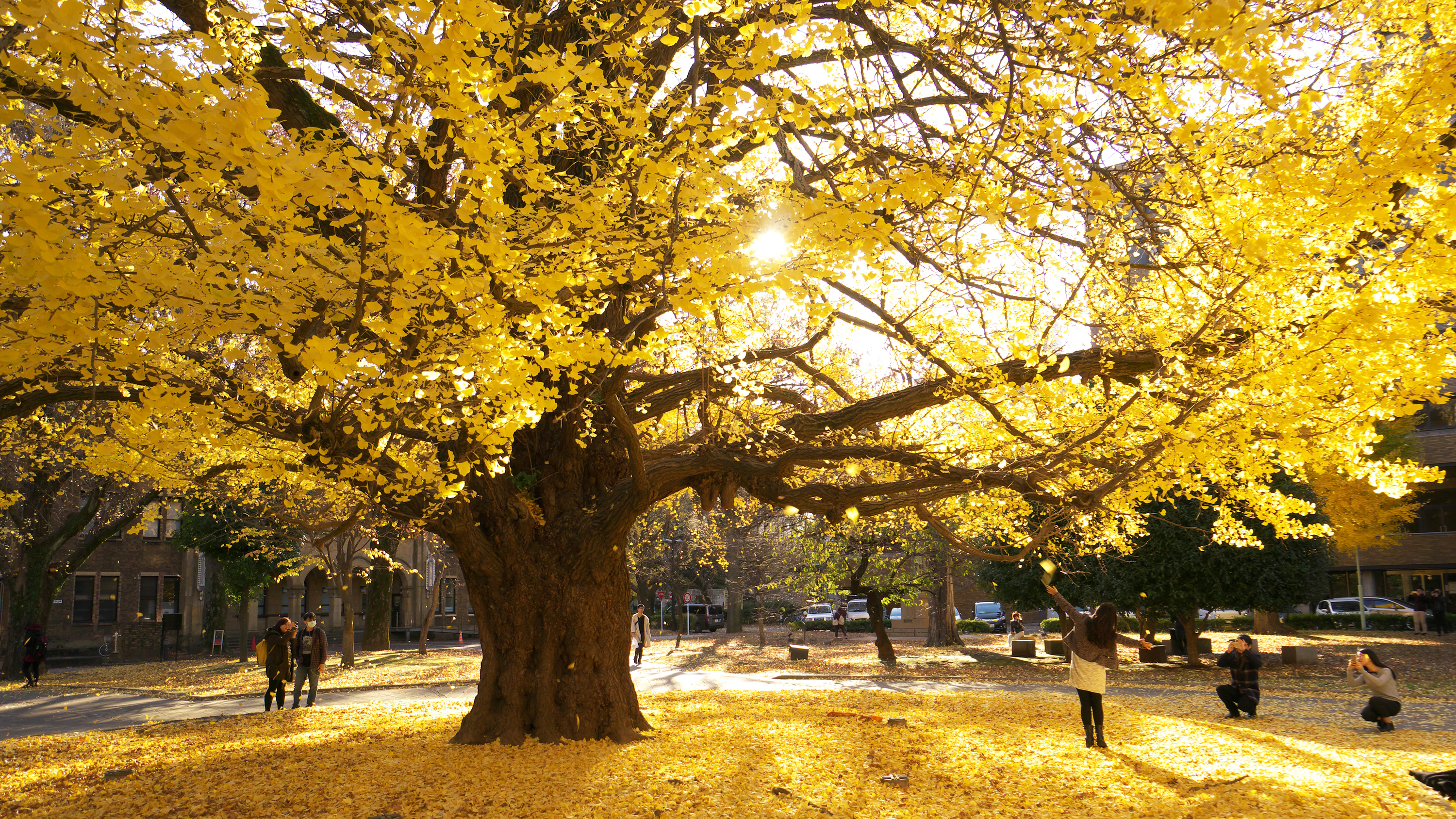 Autumn leaves at University of Tokyo