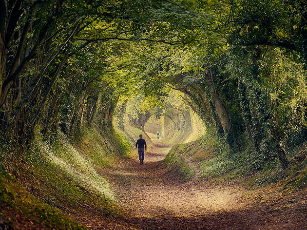 Tree tunnel in Kent