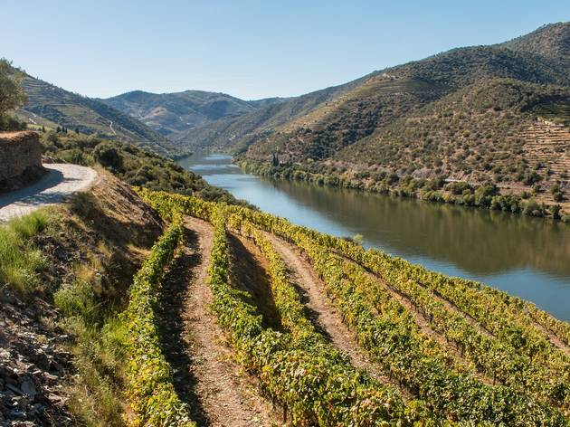 Vem aí uma caminhada guiada pelas vinhas do Douro