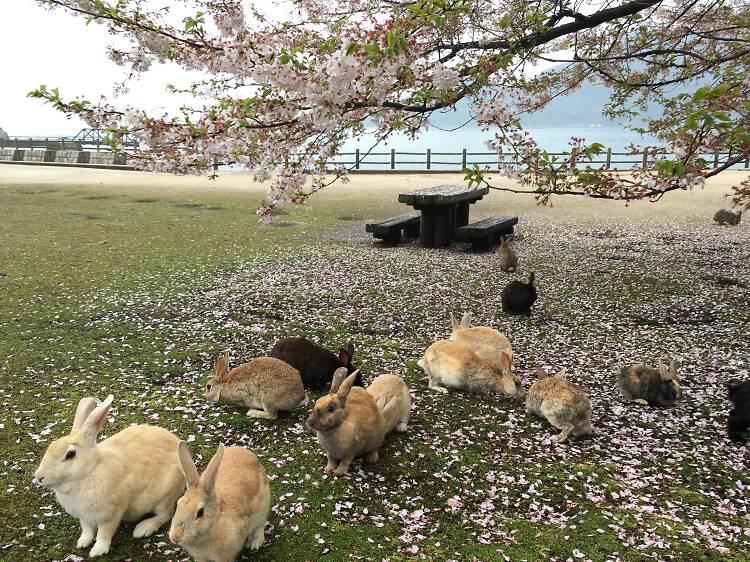 大久野島(広島県)