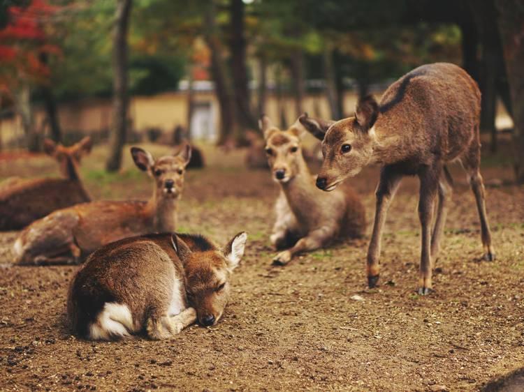 奈良公園(奈良県)