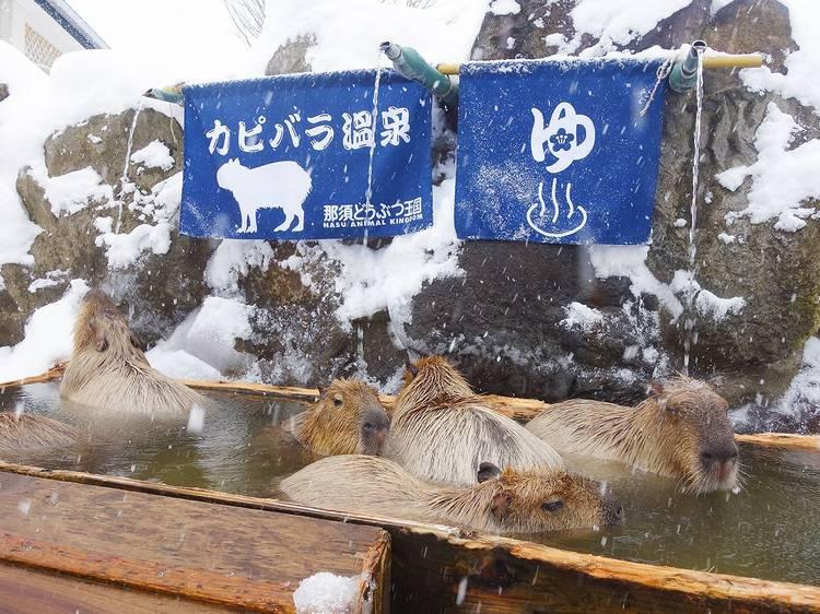 那須どうぶつ王国 カピバラの森(栃木県)