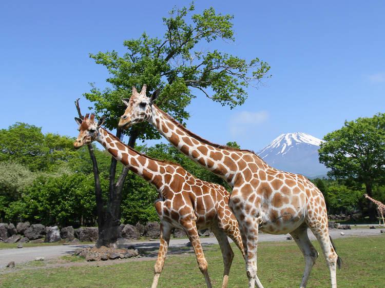動物と触れ合える観光スポット10選