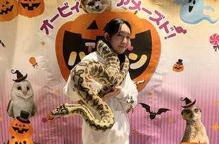 Animal Halloween 2020
