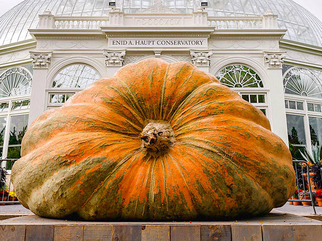 NYBG, pumpkin, giant
