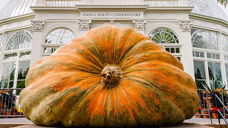 NYBG, pumpkin, giant