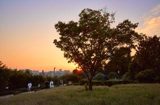 Saigoyama Park sunset