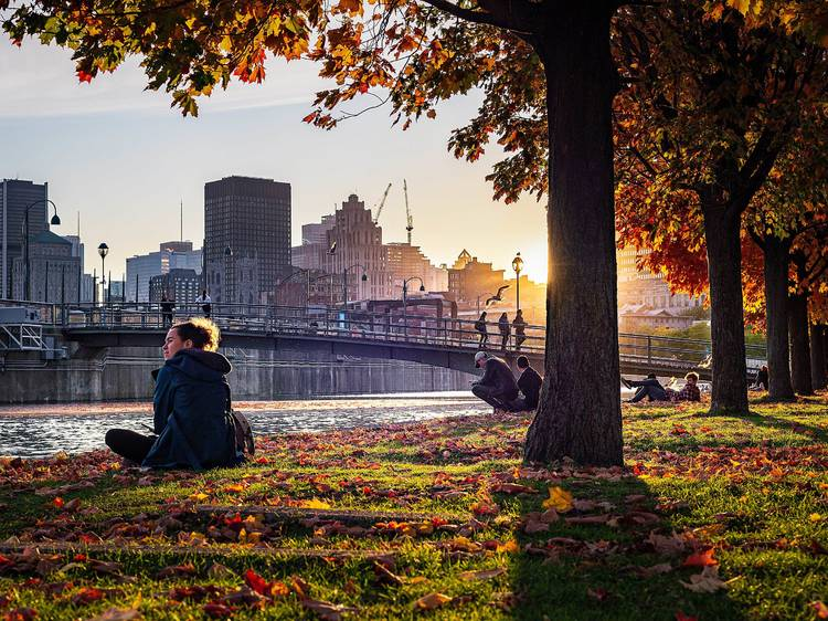It's the first day of autumn, Montreal: Use this map to track the fall colours across Quebec
