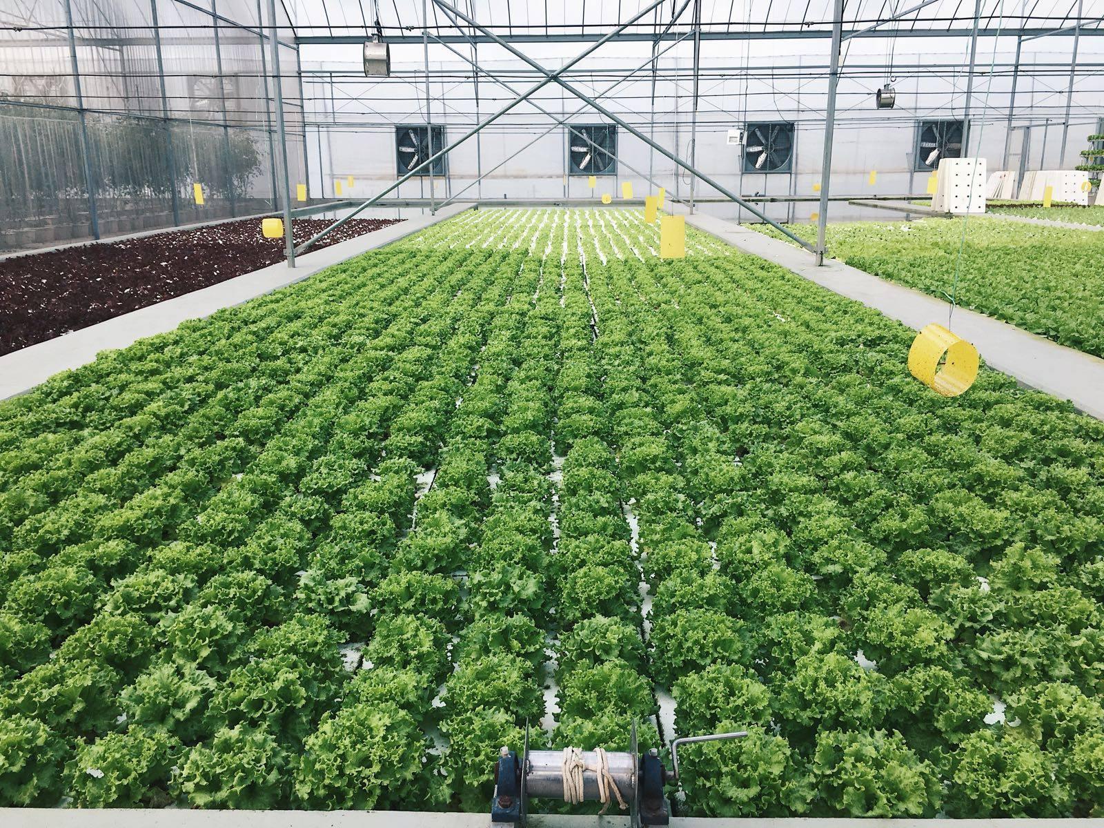 Kok Fah Technology Farm
