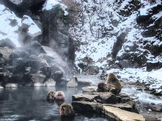 Joshinetsu Kogen National Park