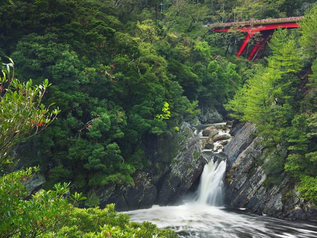 Yakushima National Park