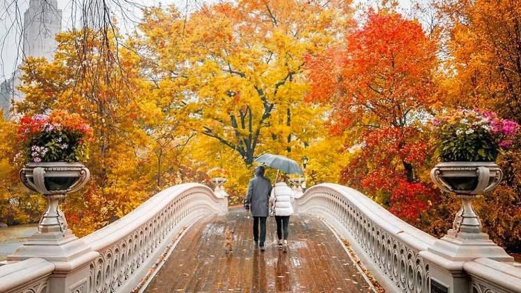 nyc fall foliage central park