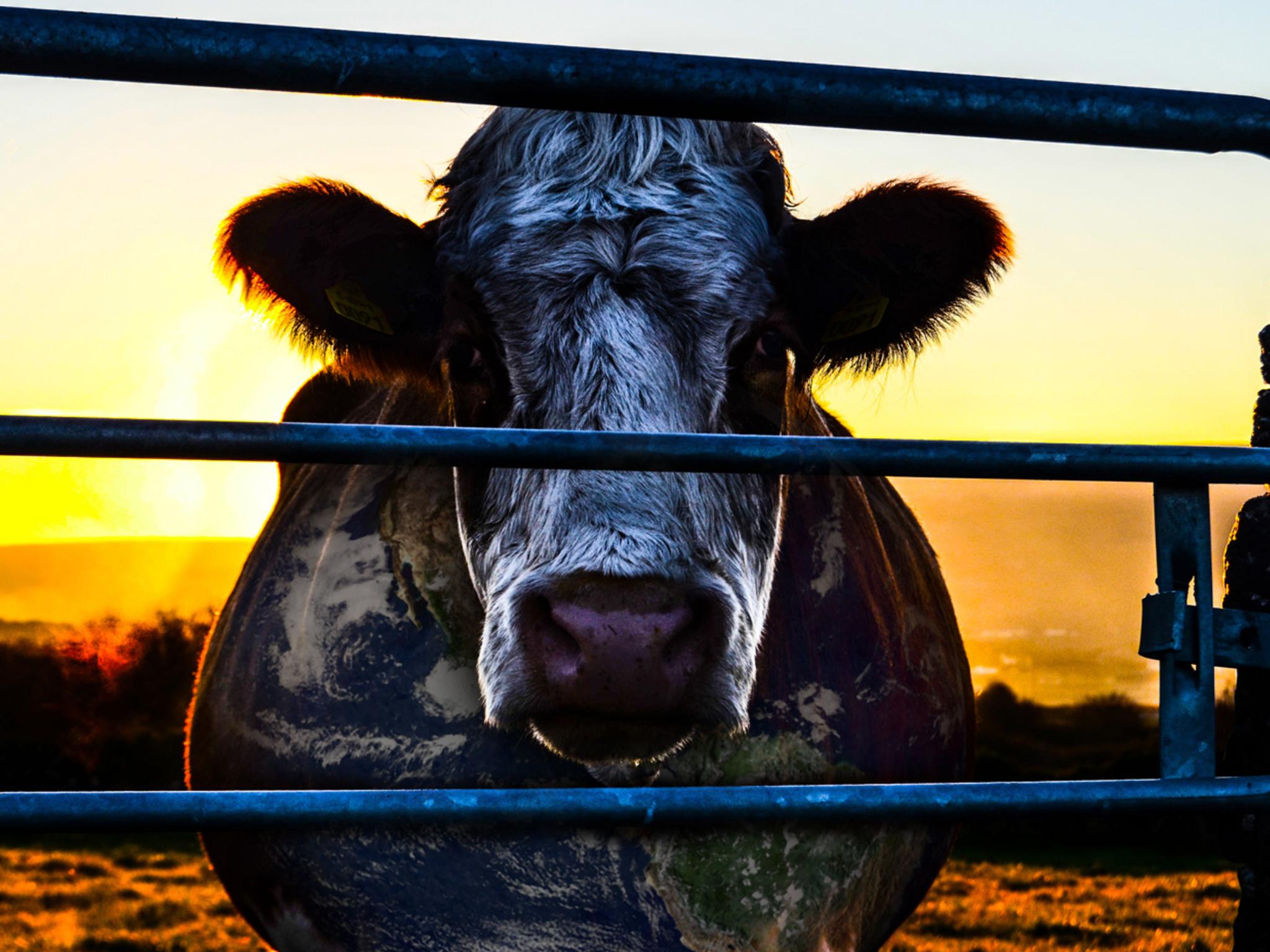 Cowspiracy, documental sobre la carne en Netflix