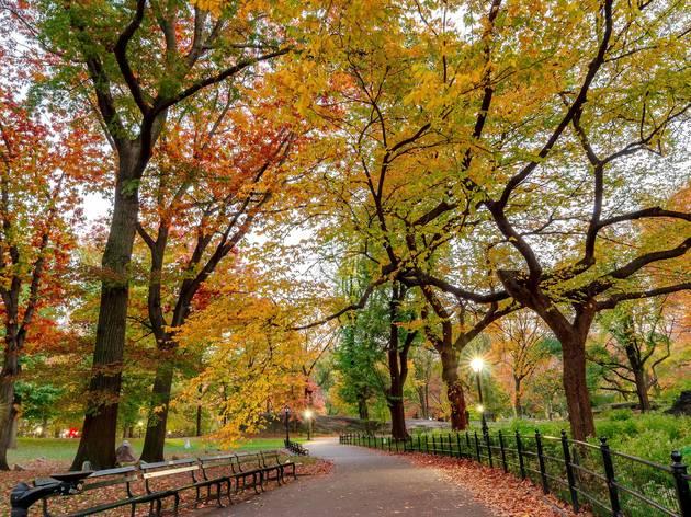 Catch fall foliage in New York