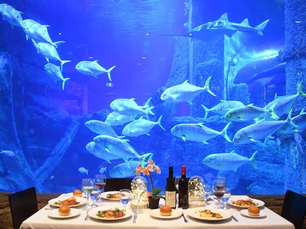 Melbourne Aquarium dining package