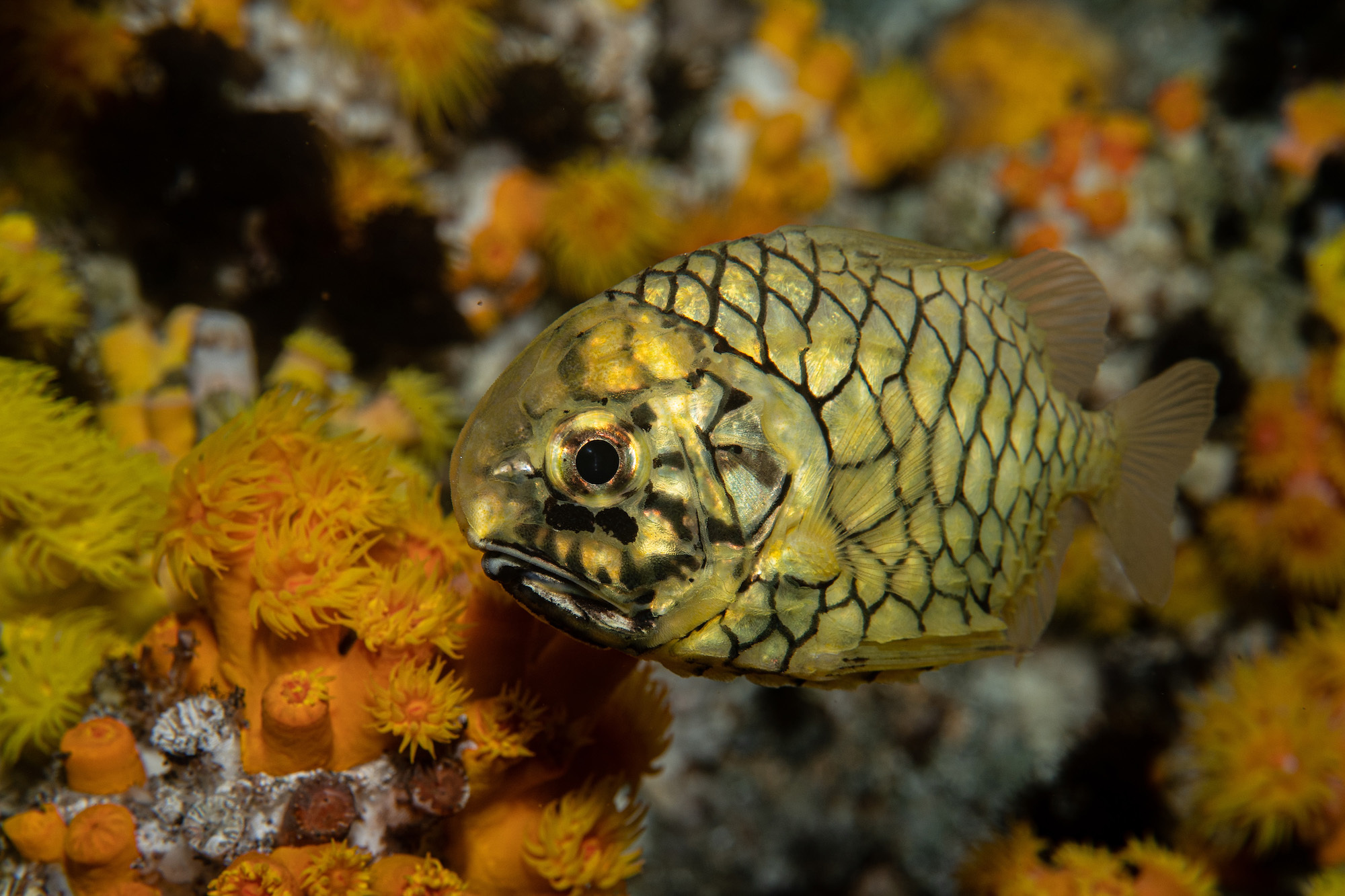 A SEAASON of Rediscovery at S.E.A. Aquarium