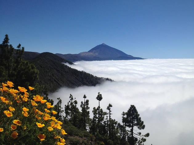 'Nébula', una nueva bebida sacada de las Islas Canarias