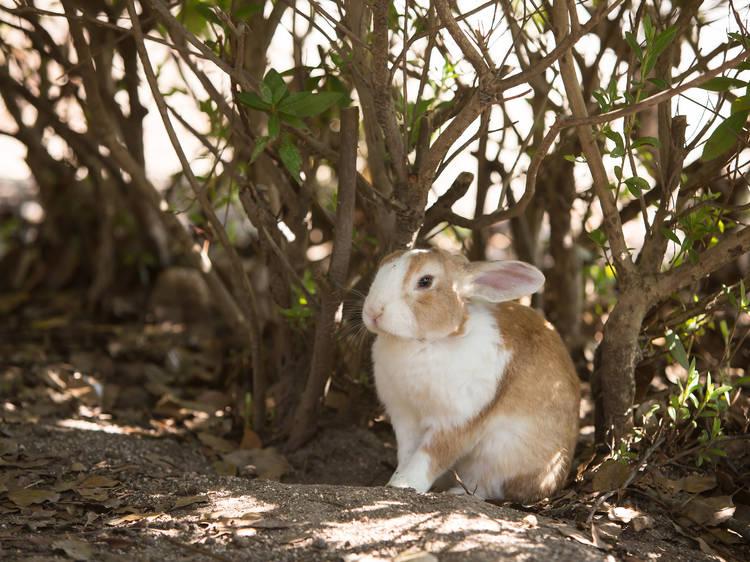 島ウサギに会いに行く。