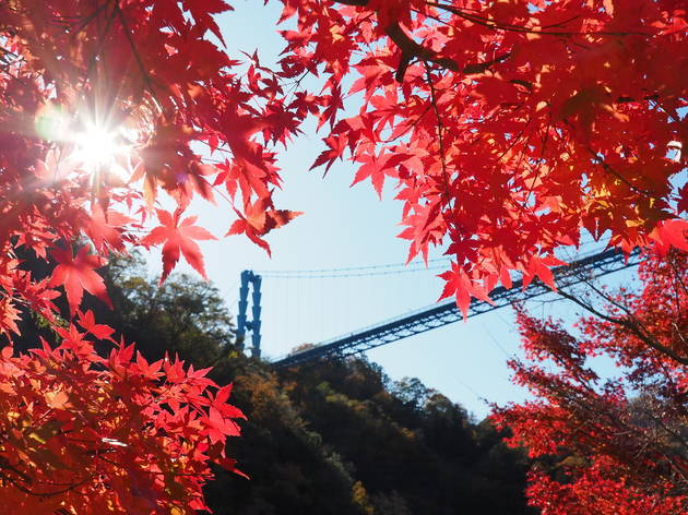 Autumn leaves Ibaraki prefecture