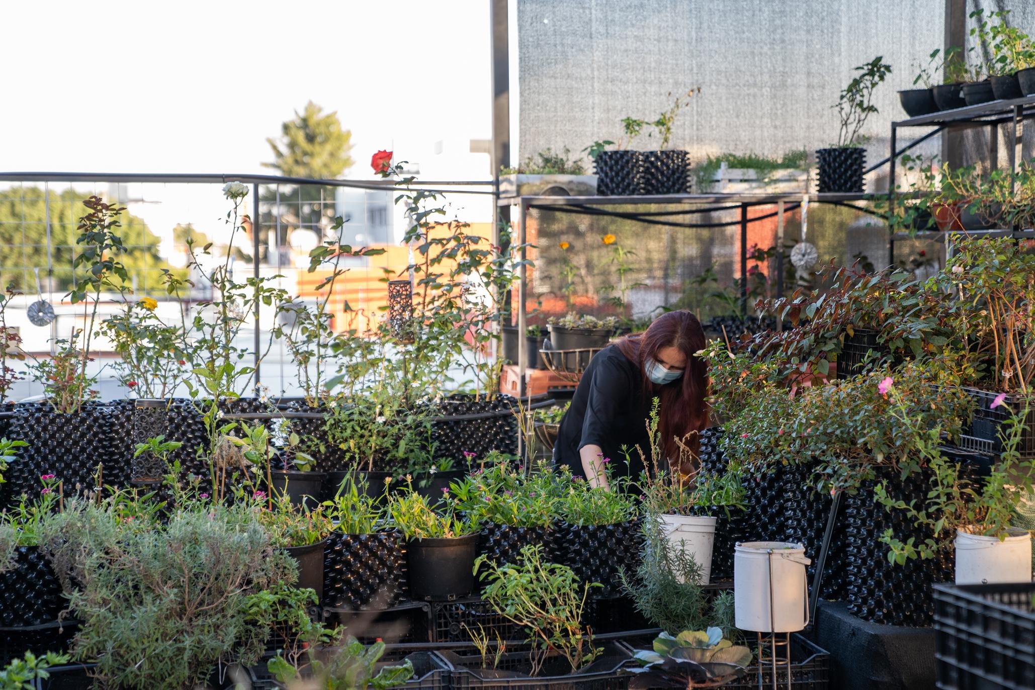 Mujer revisando unas plantas en una azotea verde