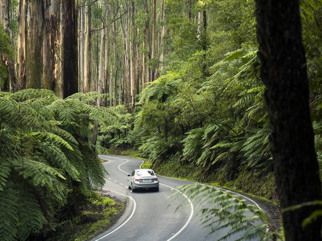 The government wants to give you $200 to travel around regional Victoria this summer