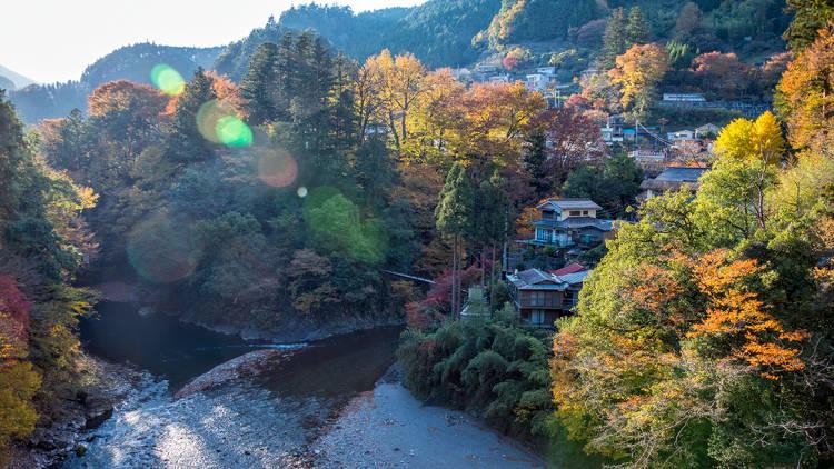 Okutama, autumn leaves