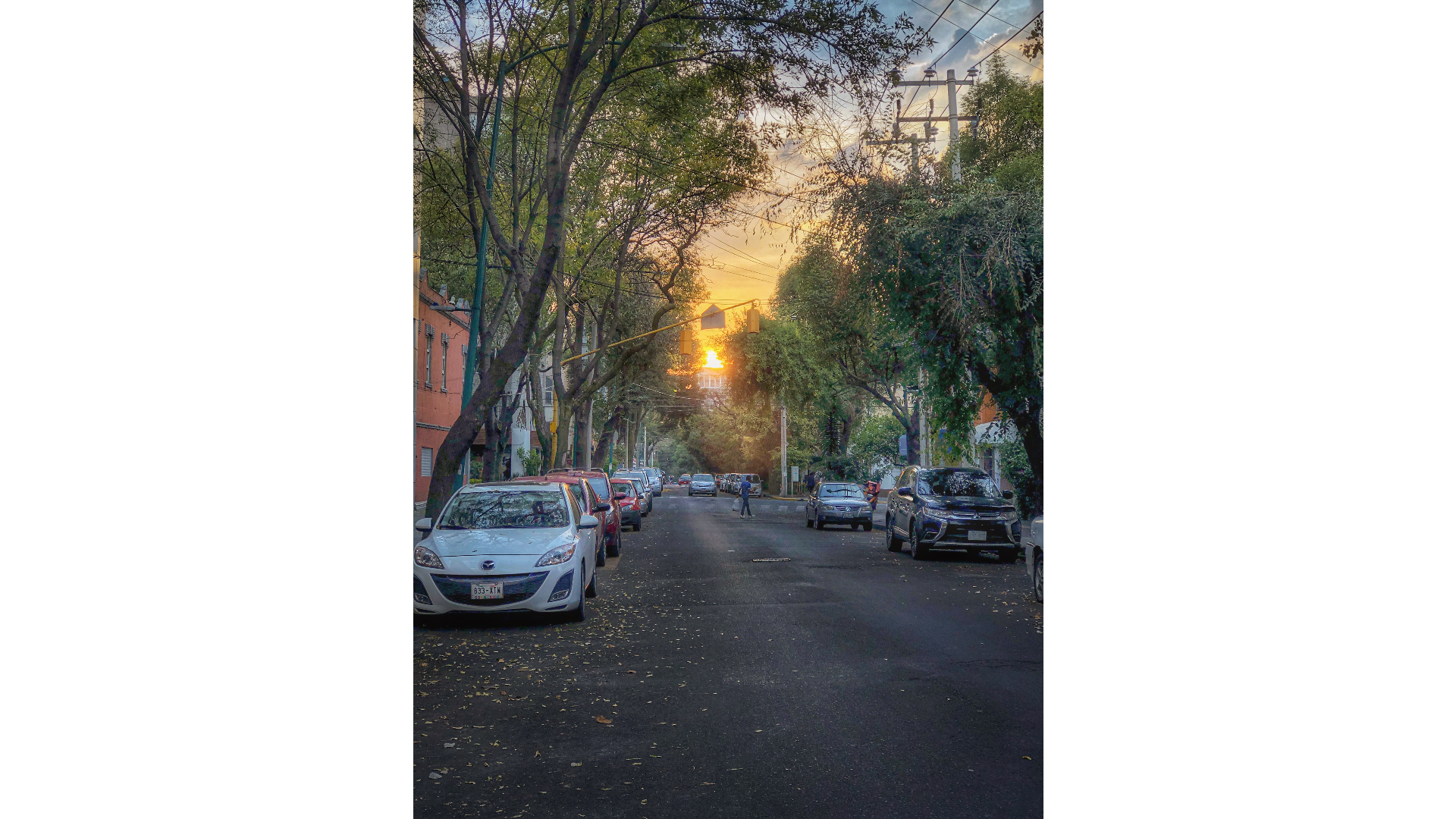 Calle de la CDMX con atardecer, árboles y algunos carros