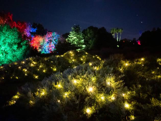 South Coast Botanic Garden's GLOW