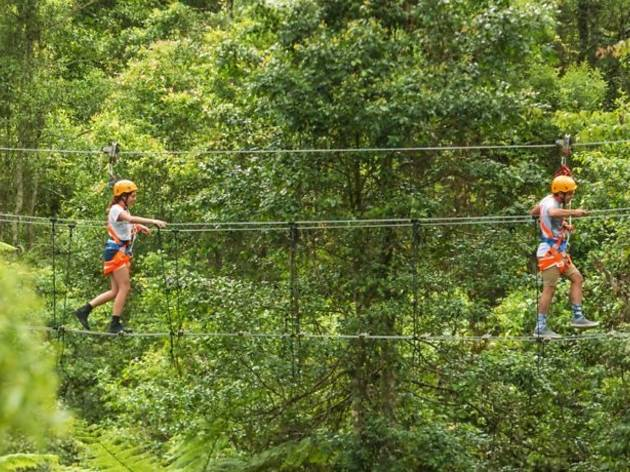 Two people walking on a zipline in the forest