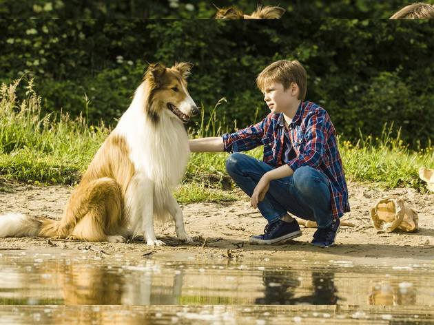 Hero dog Lassie with her owner, a young boy
