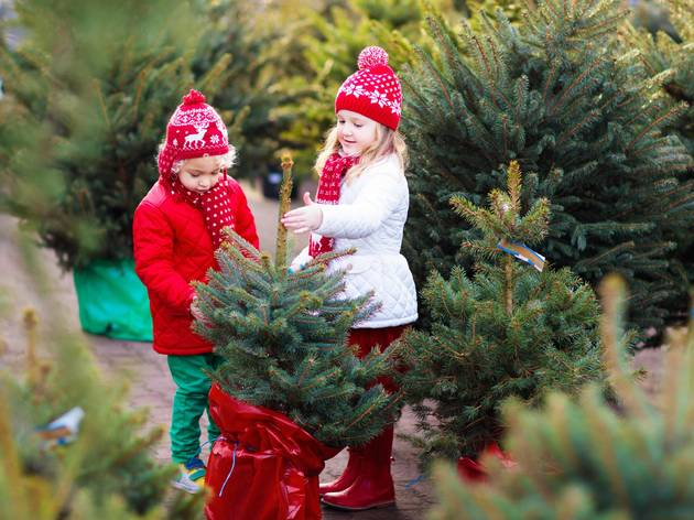 Where to find a Christmas tree farm near NYC
