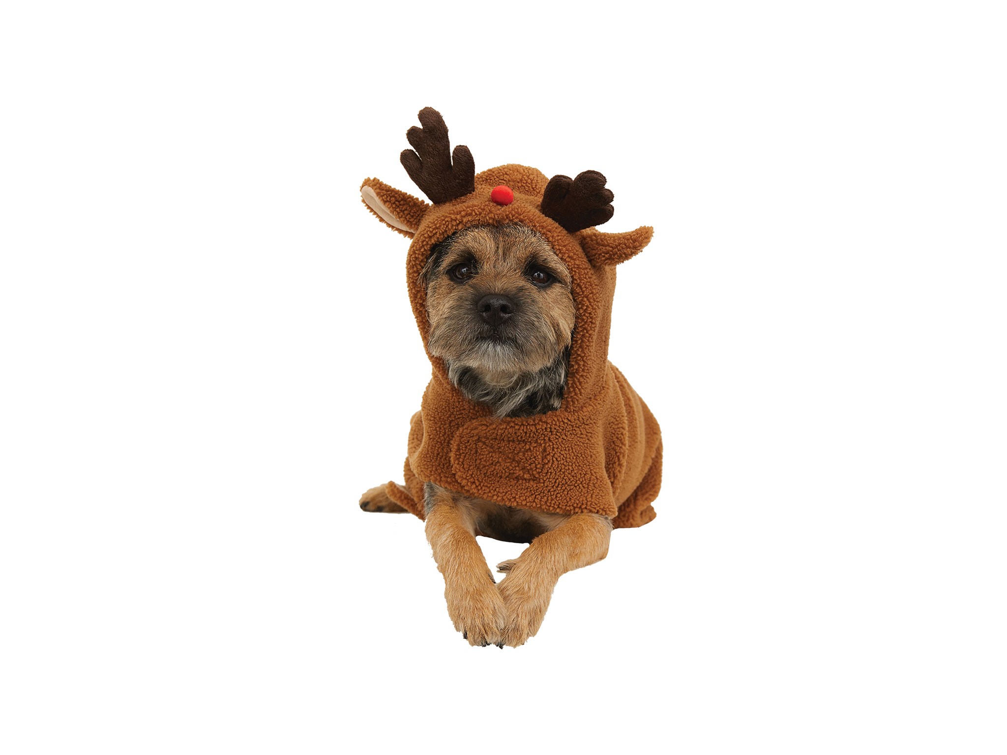 Presentes para Animais, Shopping Natal 2020, H&M