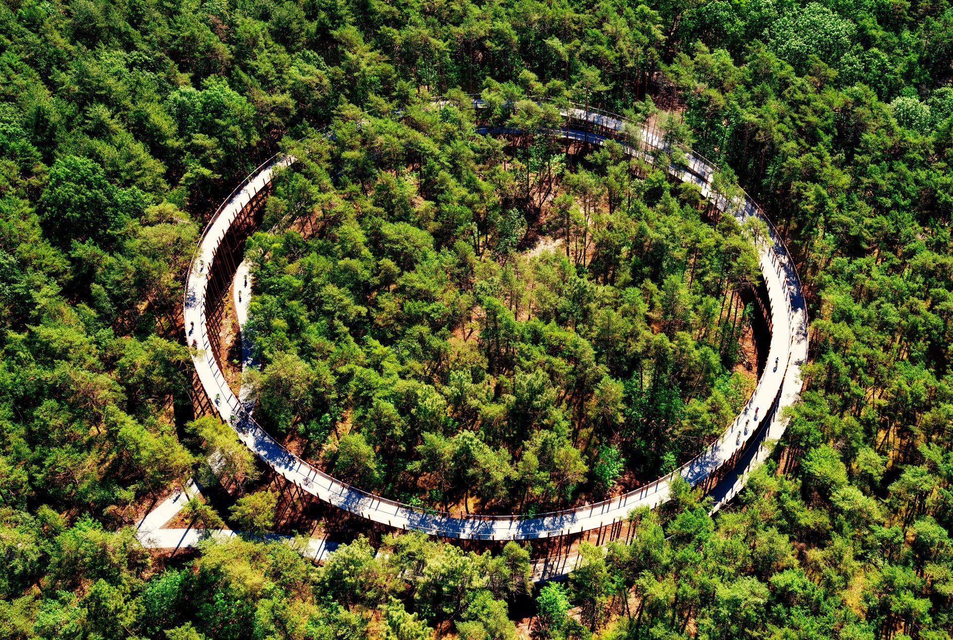 Cycle through the treetops on this spectacular new bike path